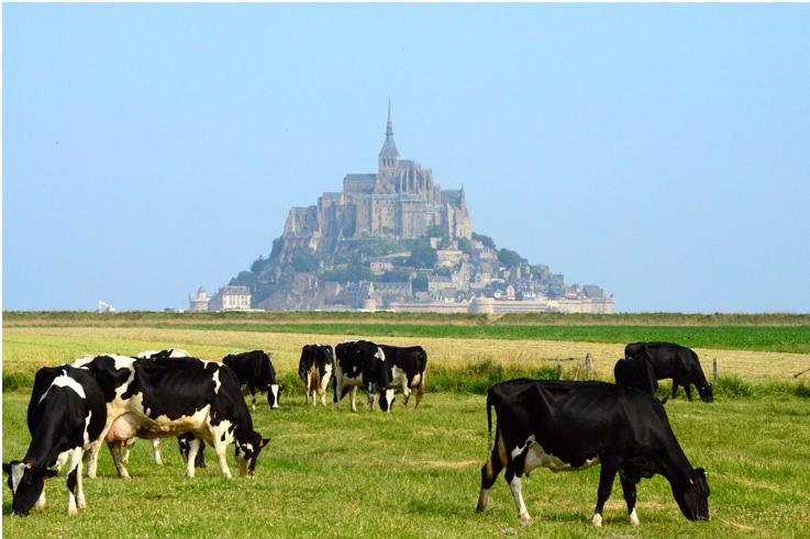 Visit the Mont Saint Michel