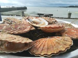 Scallops in cancale